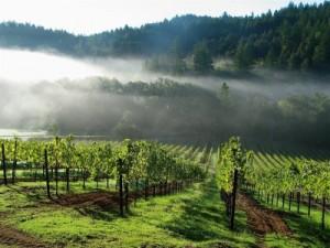 Wine Country Photo